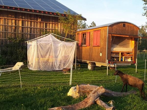 Lodge Terrazzo